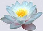 Трансмутация сознания как путь к духовному человеку. Н.В. Башкова