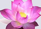 Махатма Ганди - великий пророк истины и любви.  Нина Ивахненко