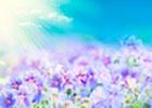 Гармония Единой Жизни – сопричастность. Любовь Калинина