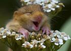 Смех полезен для здоровья.