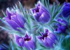 Весна идет! Алексей Селищев