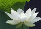 Благородный Цзонкхапа — «Высшая драгоценность тибетских мудрецов». Наталия Жукова