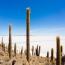 Кактусы. Салар де Юни (Salar de Uyuni), Боливия.