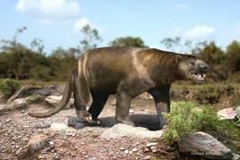 Саркастодон (Sarkastodon mongoliensis) — один из наиболее крупных млекопитающих хищников суши всех времён.