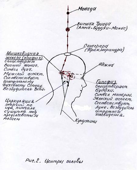 Центры головы