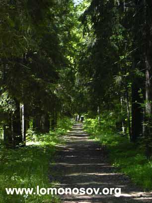 Аллея в Ломоносовском парке