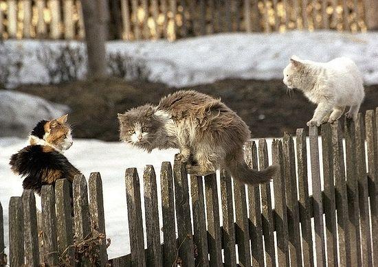 Коты-разбойники. Фото: архиеп. Вологодского и Великоустюжского Максимилиана