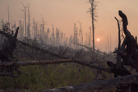 Лес, который сгорел этим летом, через 12 лет будет выглядеть так же. На фото — последствия пожаров 2003 года