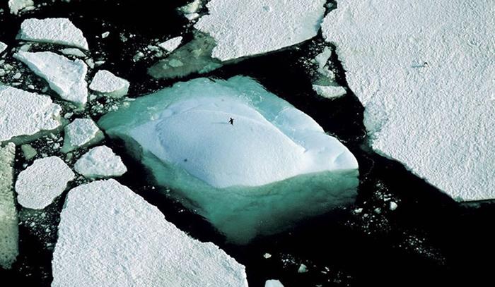 Льды Арктики угрожают миллиарду человек