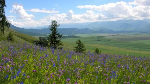 Горный Алтай. Уймонская долина