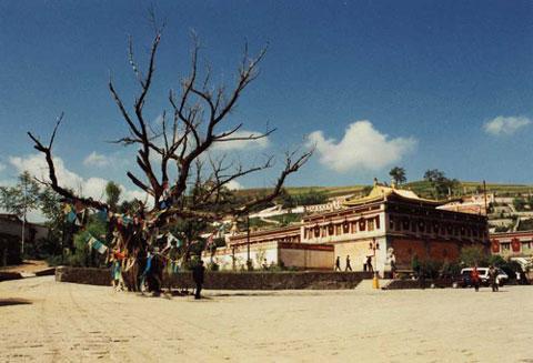 Место  рождения Цзонкхапы. Монастырь Кумбум. Амдо. Восточный Тибет.